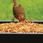Ground Bird Feeder