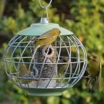 Round Helix Bird Seed Feeder – Sage