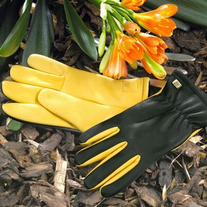 Dry-Touch-Gloves.jpg