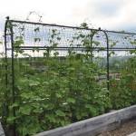 Harrod Superior Bean Frame