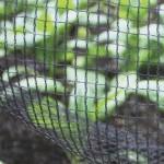 Butterfly Netting Soft Mesh