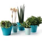 Sophie Conran Ombre Planters
