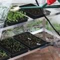 Plastic-Seed-Trays.jpg