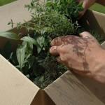 Compact Herb Garden